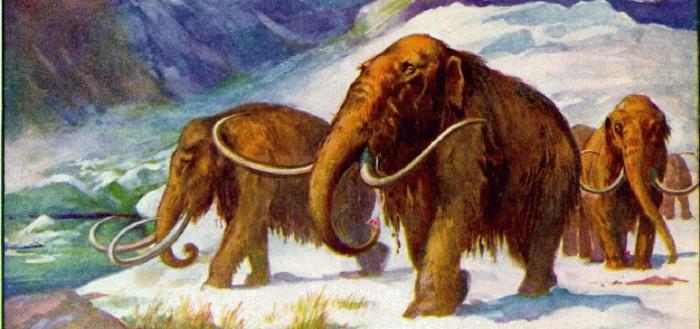 mammoth2-1a