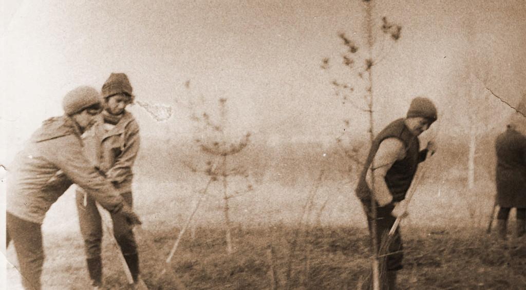 1966 год. Посадка деревьев возле больницы